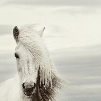 Chilean Folksong Mi Caballo Blanco (My White Horse) profile picture