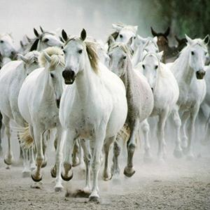 Traditional All The Pretty Little Horses (arr. Jeffrey Douma) profile picture